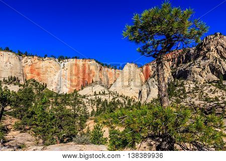 A gnarled tree among rusty cliffs in Zion National Park