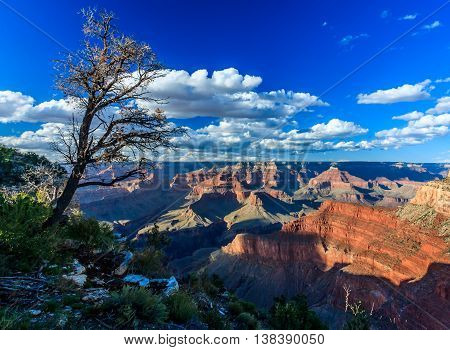 A gnarled tree on the edge of the Grand Canyon in the afternoon