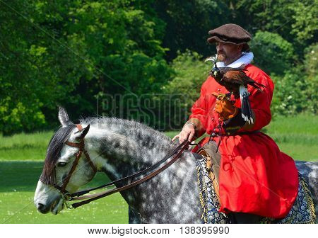 Saffron Walden, Essex, England - June 05, 2016: Hooded Harris Hawk on the glove of a man wearing a red  Elizabethan costume riding a white horse.