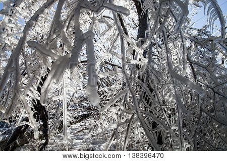Branches in the ice in thw winter forest