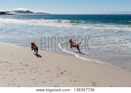 two dogs running on the ocean beach