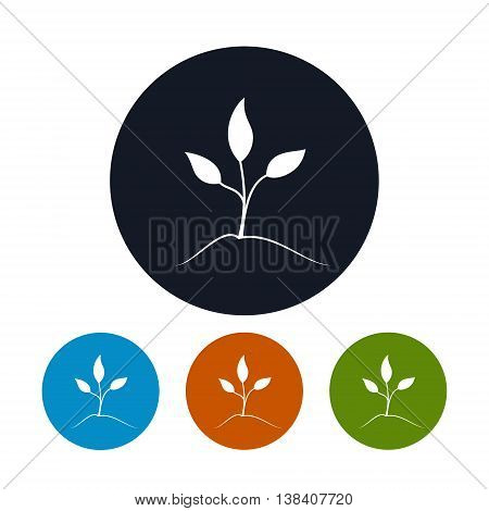 Sprout Icon, Four Types of Colorful Round Icons Young Shoot , Vector Illustration