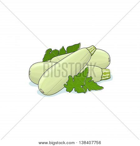Zucchini Courgette Isolated on White Background ,Three Different Kinds Courgette, Vegetables Zucchini, Edible Fruit , Vector Illustration