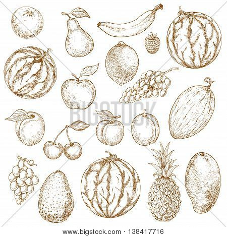 Vegan fruits sketch in vintage style. Organic ripe apple and exotic mango, fresh pineapple and raw avocado, mature melon and tasty apricot, grape branch and kiwi, pear and naturally grown plum.