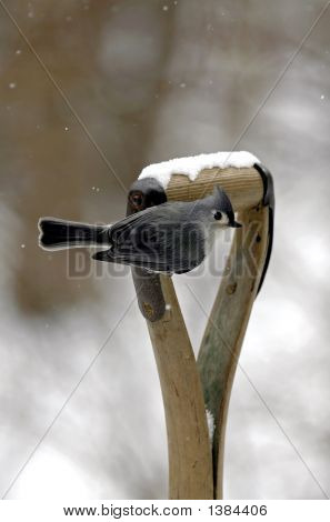 a tufted titmouse perched on an antique shovel handle in a snow storm. poster