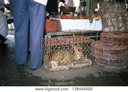 A young Reeve's muntjac (Muntiacus reevesi), also known as a barking deer, sits in a small cage below a table which displays freshly butchered meat, at the Qingping Market in Guangzhou, China, circa 1987.