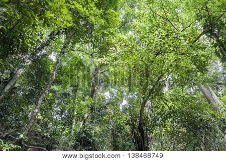 green forest background for nature background .