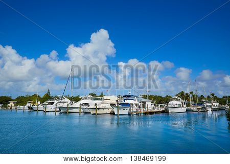 Key West Florida marina in Garrison Bight of Florida USA