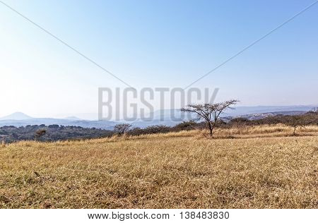Dry Winter Grass Trees And Skyline On Rural Landsacpe