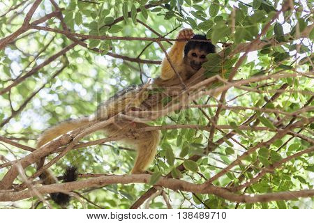 Monkey An Tree