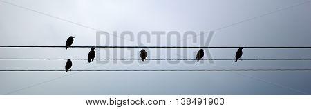 Starlings on telephone wire - Sturnus Vulgaris - in silhouette