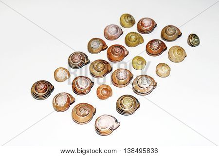 Snail Shells in Line and Random isolated on white background