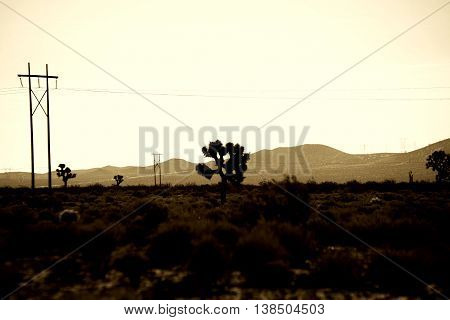 An electric pole stands in the middle of a barren desert landscape with Mojave Yucca palm trees in front of a ridge.