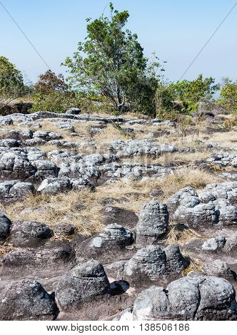 Sandstone node field in the high mountain of the national parkThailand.