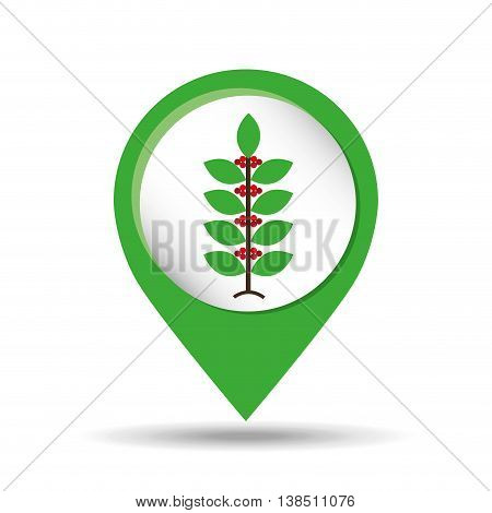 plant of coffee bean icon, vector illustration