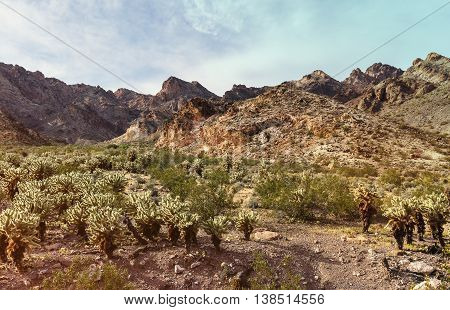 Scenic desert with Cholla cactus in southern Nevada near Nelson Ghost Town USA