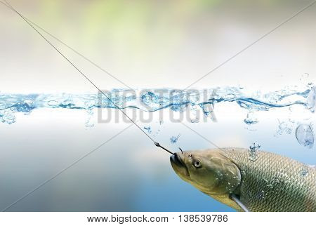 Caught And Hooked Fish On Fishing Hook Under Water