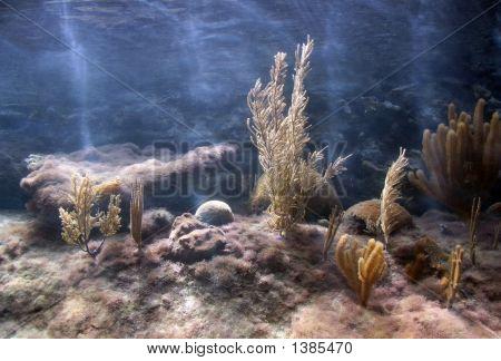 Caribbean Coral Tank