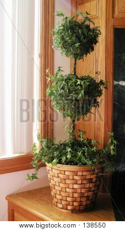 Ivy Topiary Houseplant