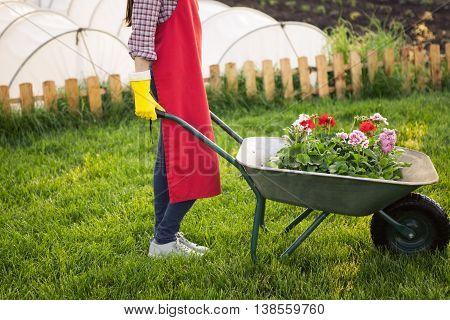 Gardener with flowers in wheelbarrow working in back yard
