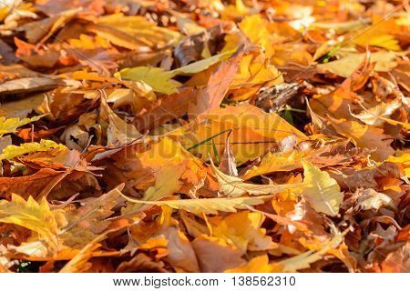 Cloes up from colorful autum foliage on ground