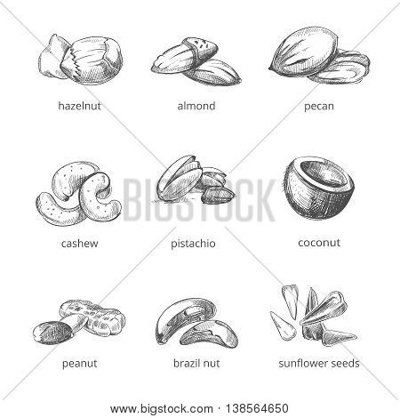 Vector nuts set in hand drawn style. Collection of nuts almond and peanut, walnut and cashew nuts illustration