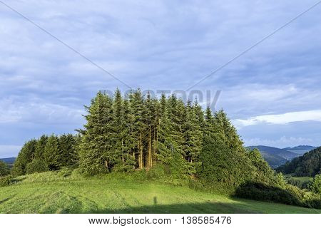 Rural Eifel Landscape With Forest And Green Meadow