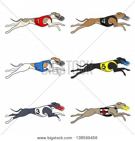 Vector set of running dog whippet breed, in dog racing or coursing dress