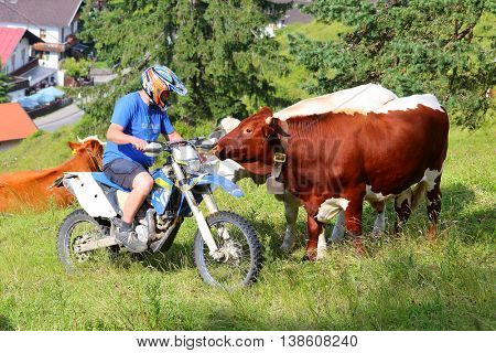 GARMISCH PATERKIRCHEN GERMANY - JUNE 4, 2016: Unidetified farmer on motorcycle feeding his cows. Agriculture in alpine region. Living and farming in European Union.