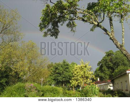 African Rainbow With Tree