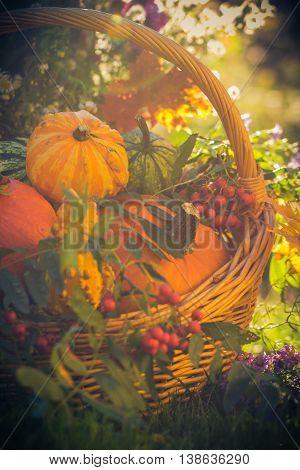 Basket Autumn Fruit Colorful Pumpkins Asters