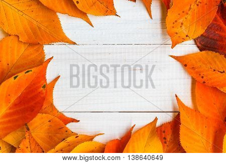 Composition Autumn Fiery Orange Leaves White Boards