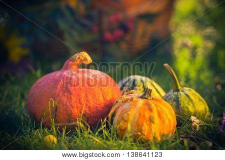 Gifts Autumn Garden Pumpkins Basket Grass