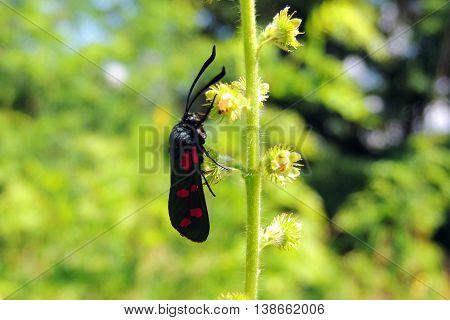 Beetle On Grass