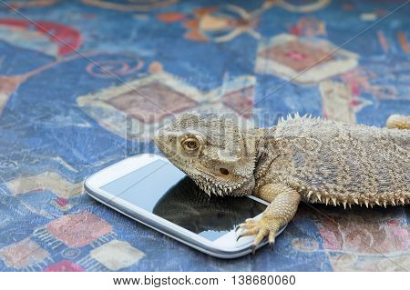 Closeup side view of Agama lizard lying on a sofa. Smart phone is lying under it. Agama is looking forward. All potential trademarks are removed.