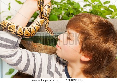 Close portrait of a young boy holding his lovely pet snake - Royal or Ball Python close to face
