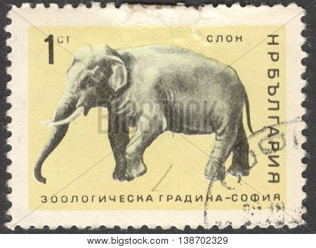 MOSCOW RUSSIA - JANUARY 2016: a post stamp printed in BULGARIA shows a elephant (Elephas maximus) the series