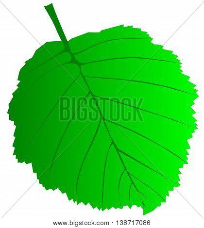 leaf alder , isolated alder leaf , leaf alder illustration ,