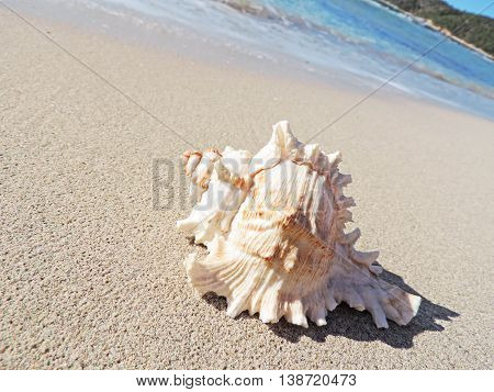 Conch shell at the beach, selective focus on the foreground with copy space. Sand and sea shell.