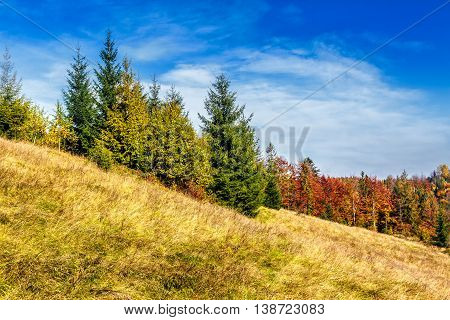 Red Trees On Meadow In Mountains
