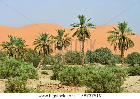 Oasis in Sahara Desert, Morocco, North Africa