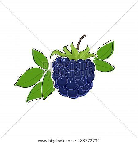 Berry Blackberry Isolated on White Background , Fruit Dewberry, Vector Illustration