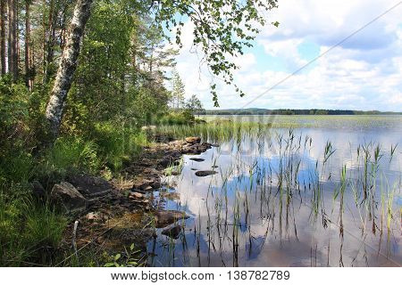 Beautiful nature lakes and forests of Finland