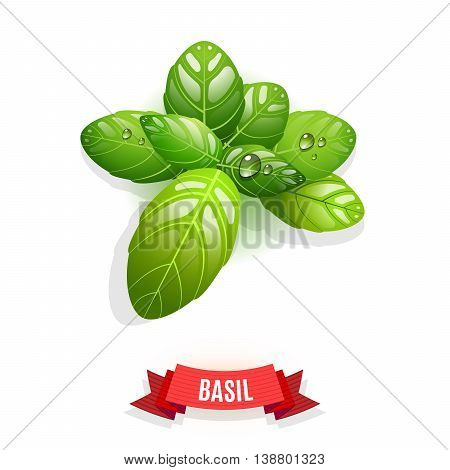 Leaves of Genovese basil, Thai basil, lemon basil or holy basil. Isolated on white background. Herb with water drops. Vector illustration