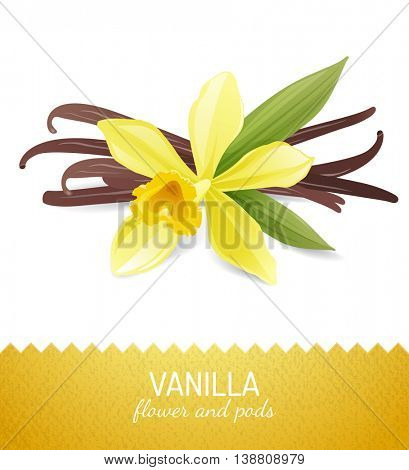 vanilla flower and pods over white background