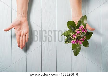 Two open female hands palms up one hand holds a flower the second with nothing on a blue wooden background. Choice priority or dilemmas eco concept.