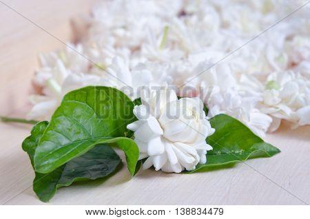 Jasmine (Other names are Jasminum Melati Jessamine Oleaceae Jasmine) flowers spread on wooden board background