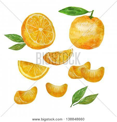 Whole Orange Fruit and Orange Fruit Slices isolated on white Background. Watercolor Set.