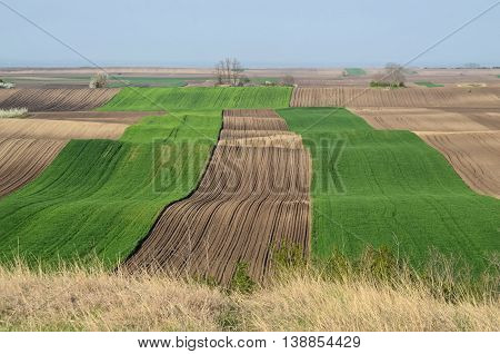 Hilly wheatgrass fields in early spring. Agriculture in central Europe.