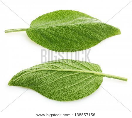 Fresh sage leaves isolated